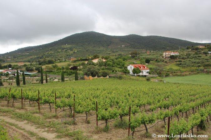 Viñedos en Extremadura