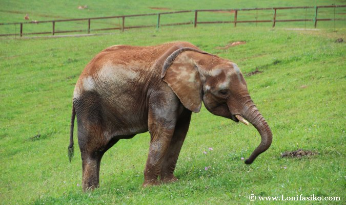 Ver animales elefantes en Cabárceno