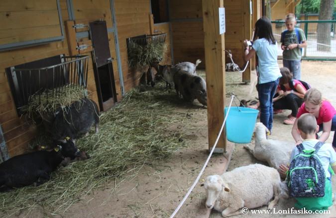 Visitar zoo de Liubliana con niños