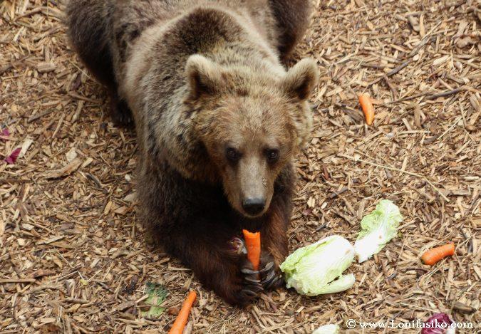 ¿Qué comen los osos?