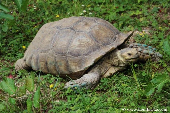 Tortugas en el zoo de Liubliana