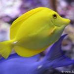Peces tropicales de colores llamativos en el Aquarium