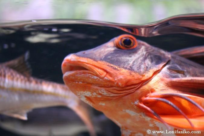 Peces extraños en el Aquarium