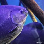 Qué peces ver en el Aquarium de Donostia