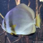 Peces de tropicales en el Aquarium