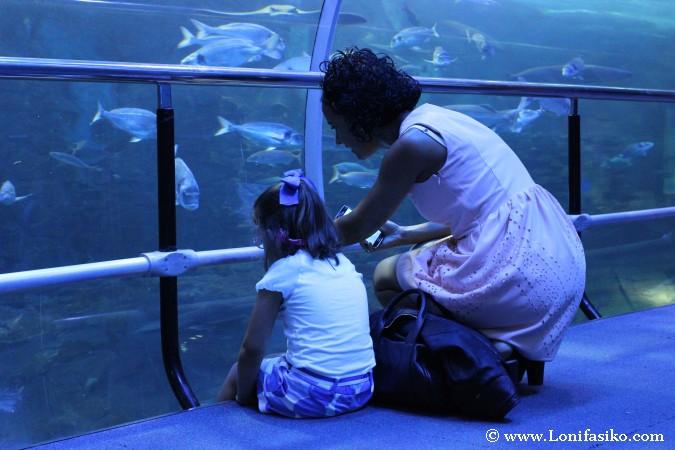 Inmersión en el Aquarium