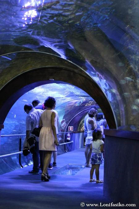 Túnel panorámico del Aquarium de Donostia-San Sebastián