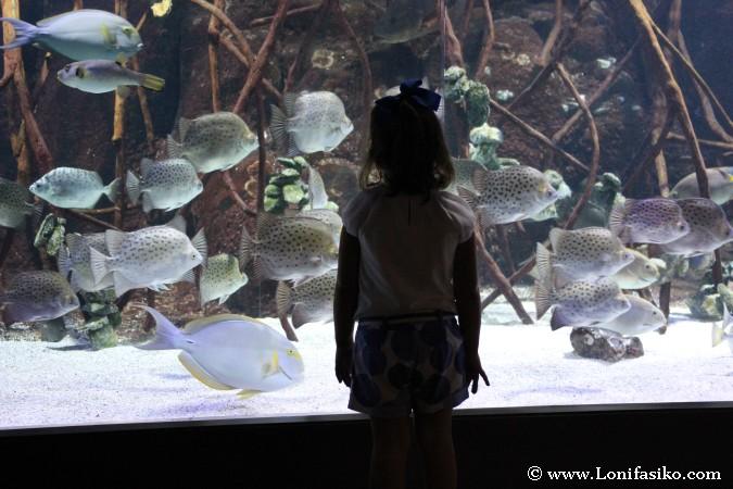 Aquarium de Donostia-San Sebastián con niños