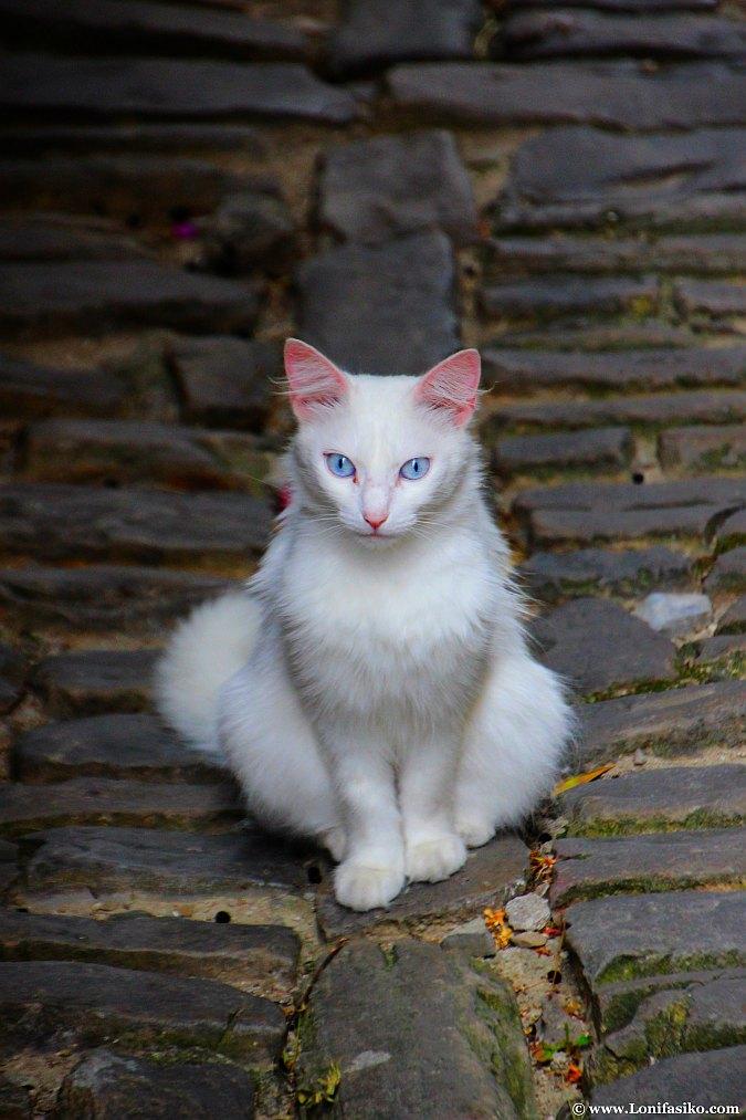 Fotografías de gatos misteriosos