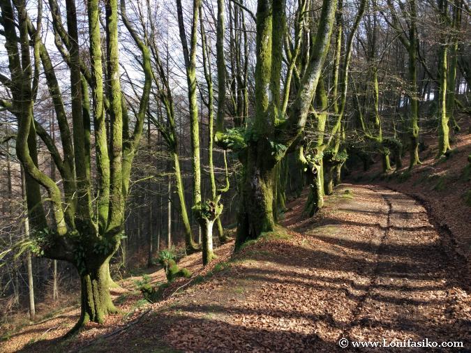 Hayedos Fotografía Euskadi: Azkonabieta