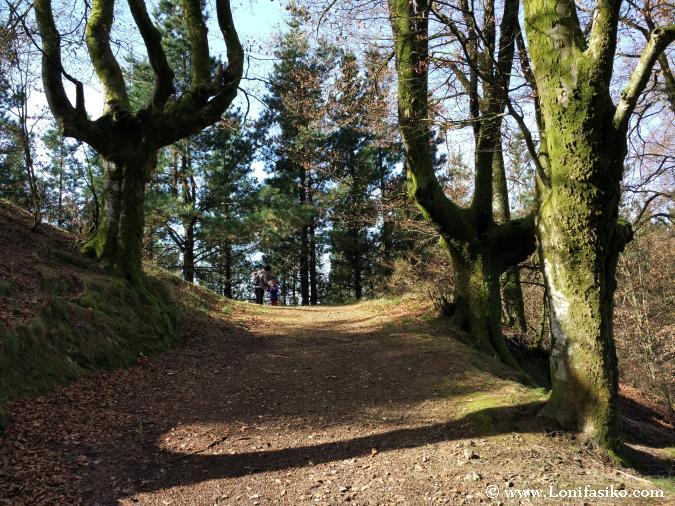 Bosque de hayas Euskadi