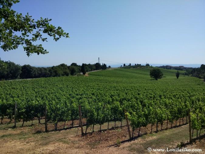 Viñedos Toscana Fotos Vino