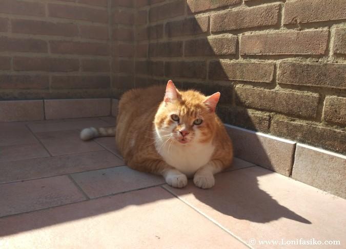 Alojamientos Toscana admiten mascotas