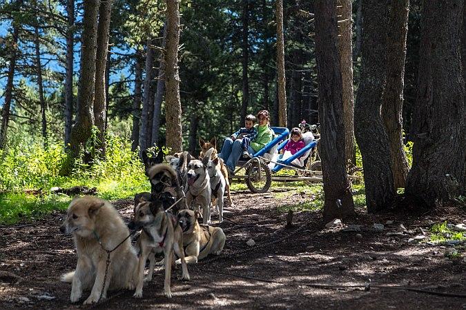 Andorra trineo perros