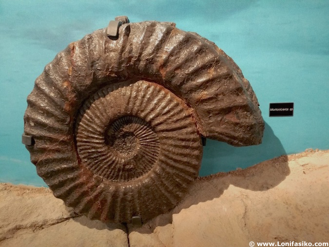 Museo Nautilus Mutriku fotos ammonites gigantes