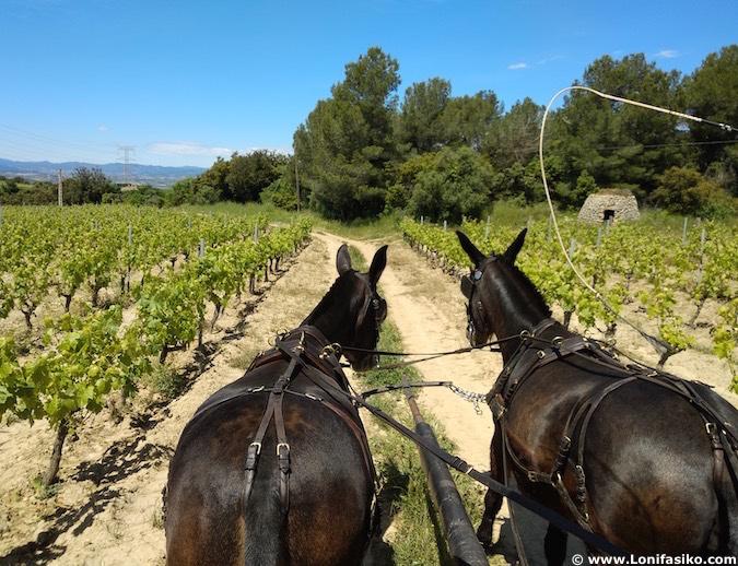 Mejores experiencias enoturismo España