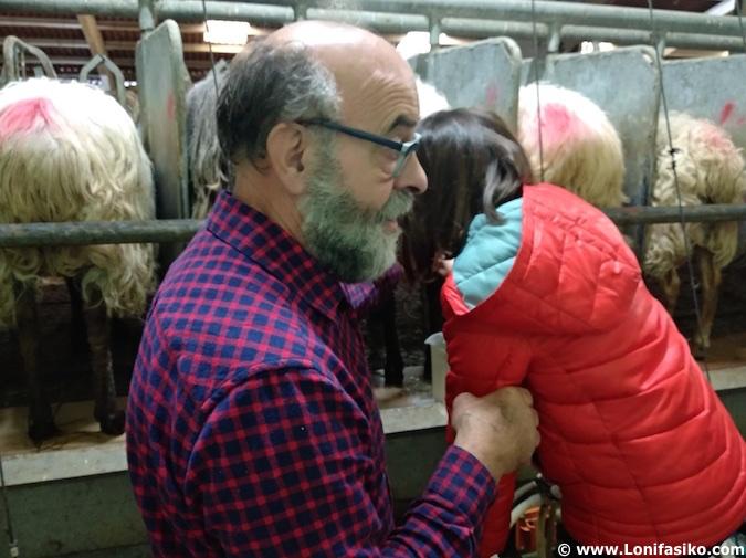 Aprender a ordeñar leche de oveja latxa