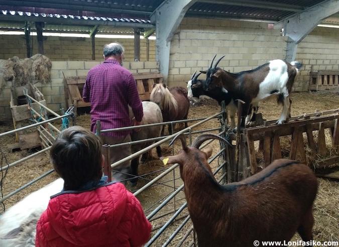 experiencia pastor por un día precios