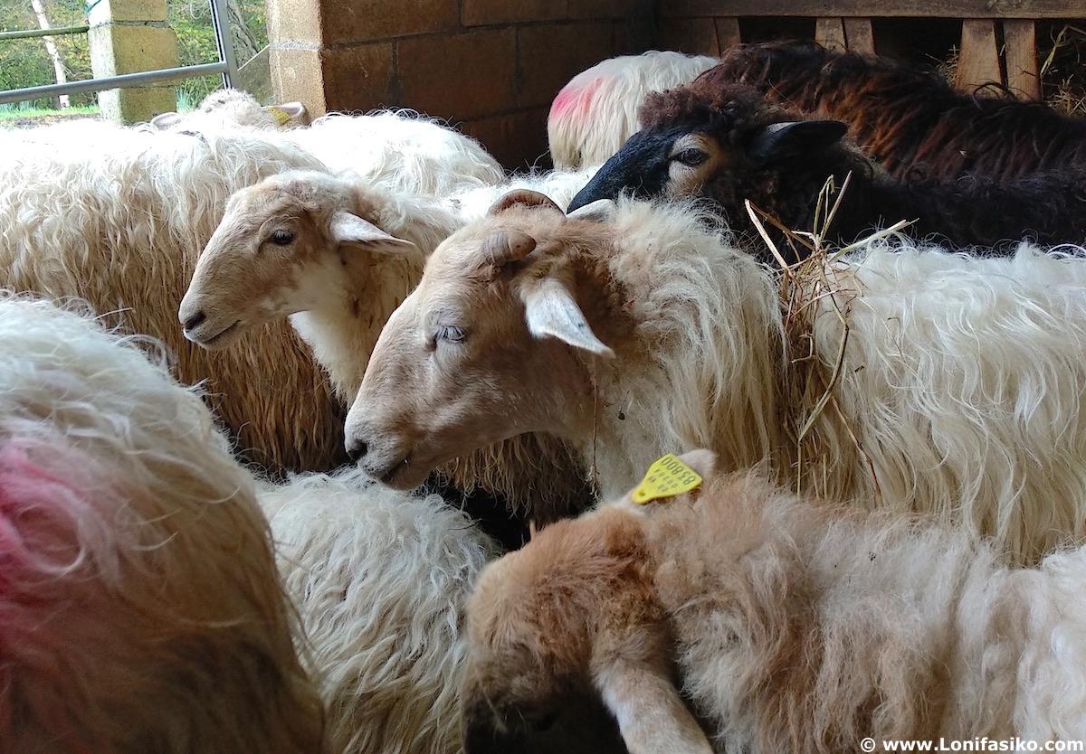 experiencia pastor por un día en Urkiola