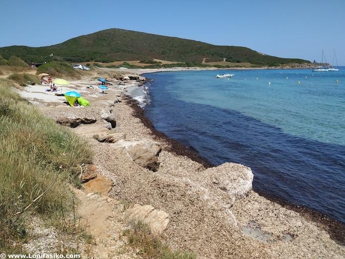 posidonia en playas de Córcega