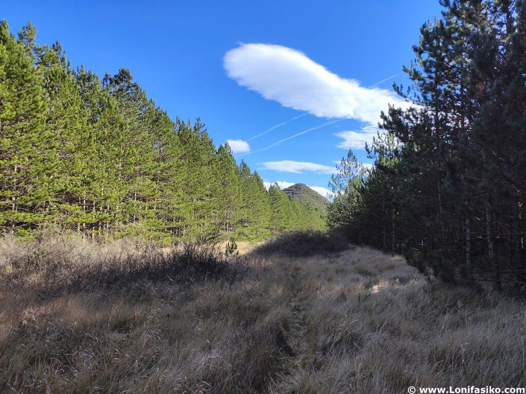 Bosques Montes Obarenes