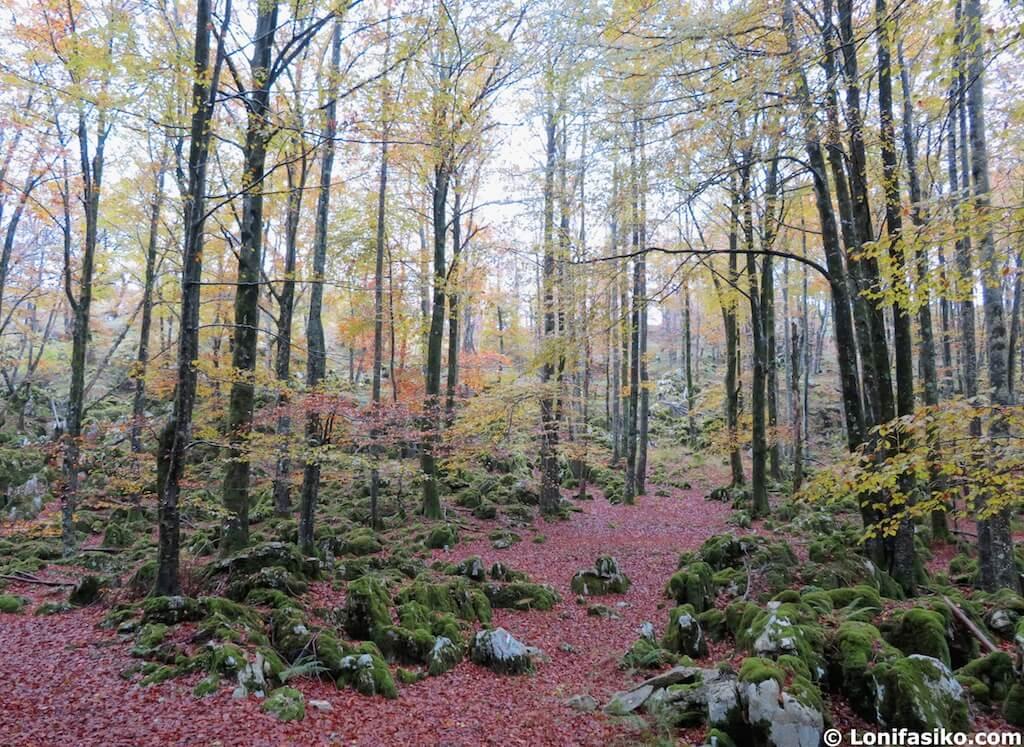 bosques hayas aralar pais vasco