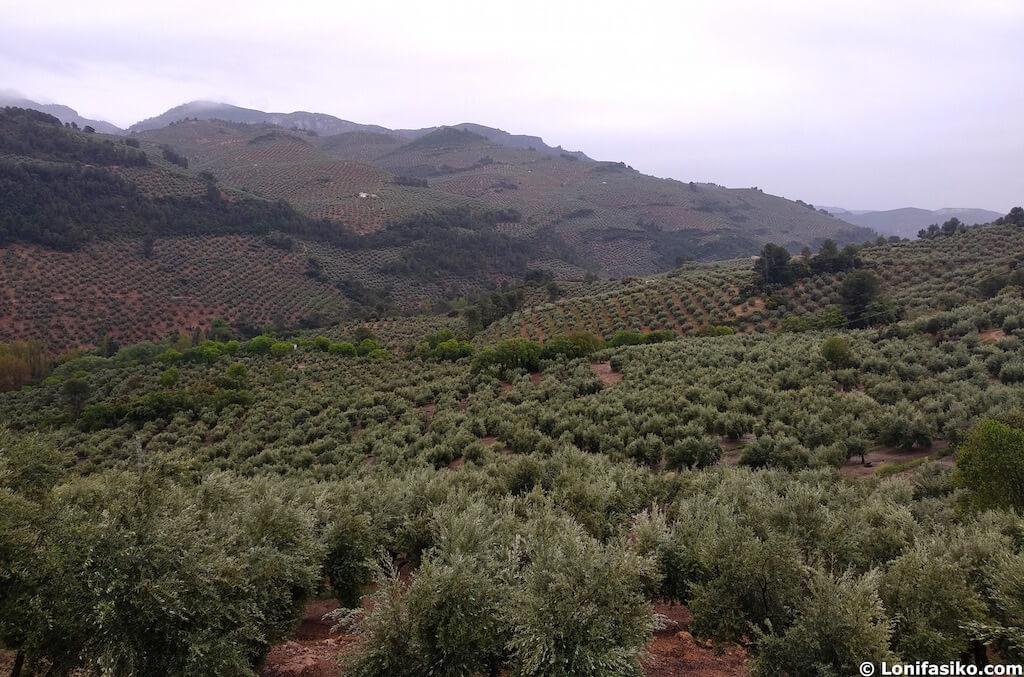 mar de olivos sierra las villas