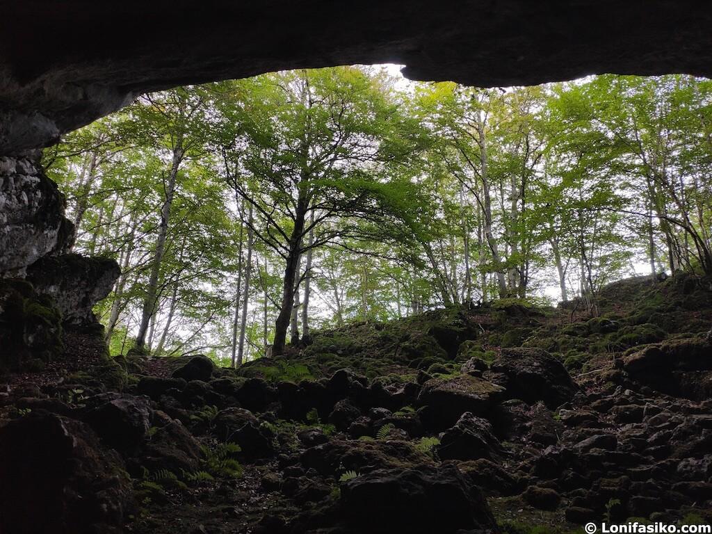 baño de bosque aralar navarra Shinrin Yoku