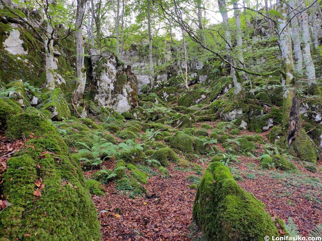 baño de bosque navarra aralar